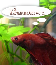 b_nest_r