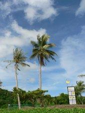Guam02_1