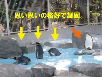 penguin02062