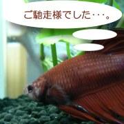 sakamaki_r