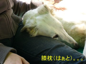 shizuku1.jpg