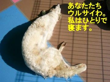 shizuku3.jpg