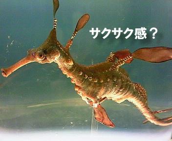 Sakusaku02