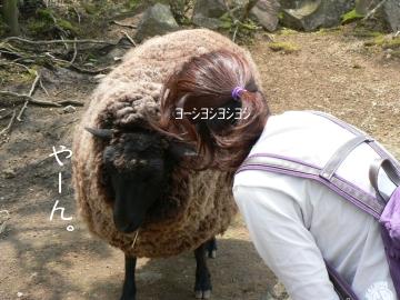 Hitsujisan_01